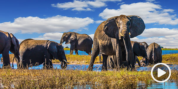 Dream of vibrant wildlife while experiencing Africa