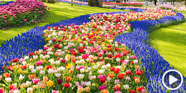 Essential Holland and Belgium Culinary Cruise: Tulips in Spring